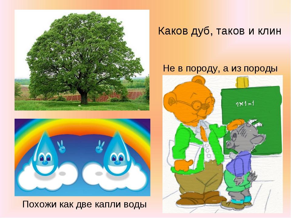 Каков дуб, таков и клин Не в породу, а из породы Похожи как две капли воды
