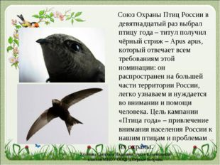 Cоюз Охраны Птиц Россиив девятнадцатый раз выбрал птицу года – титул получи