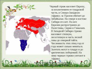 Черный стриж населяет Европу, за исключением ее тундровой части, и Северо-За