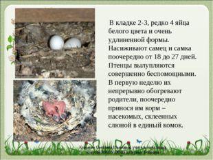 В кладке 2-3, редко 4 яйца белого цвета и очень удлиненной формы. Насиживают