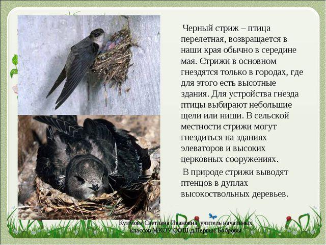 Черный стриж – птица перелетная, возвращается в наши края обычно в середине...