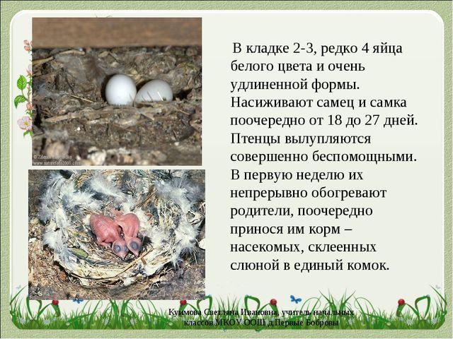 В кладке 2-3, редко 4 яйца белого цвета и очень удлиненной формы. Насиживают...