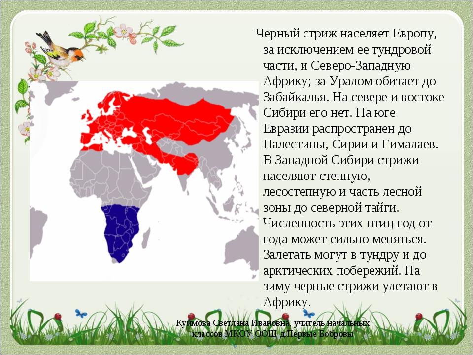 Черный стриж населяет Европу, за исключением ее тундровой части, и Северо-За...
