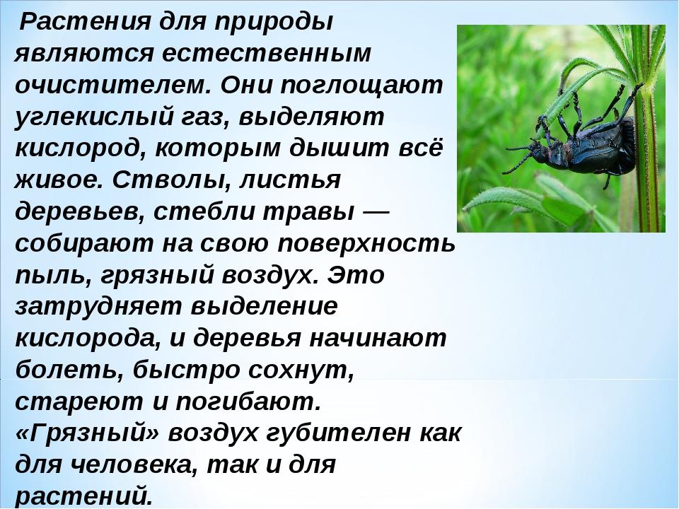 Растения для природы являются естественным очистителем. Они поглощают углеки...