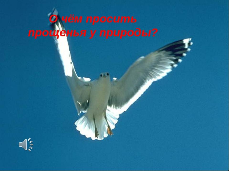 О чём просить прощенья у природы?