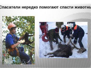 Спасатели нередко помогают спасти животных