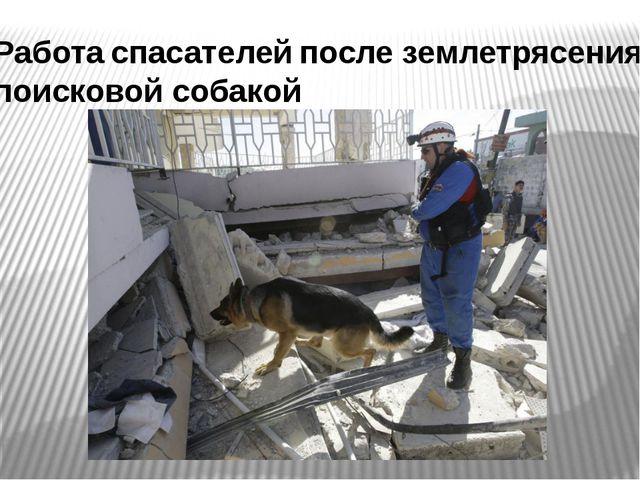 Работа спасателей после землетрясения с поисковой собакой