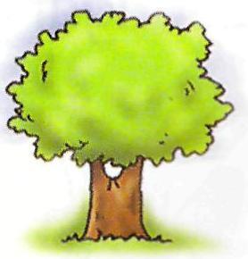 C:\Documents and Settings\учитель\Рабочий стол\шерстнёва с.в\уроки\дерево.jpg