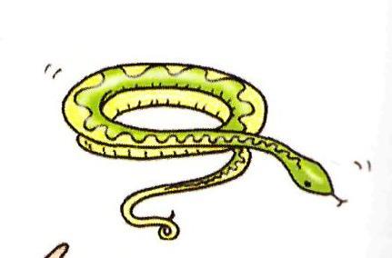 C:\Documents and Settings\учитель\Рабочий стол\шерстнёва с.в\уроки\змея.jpg