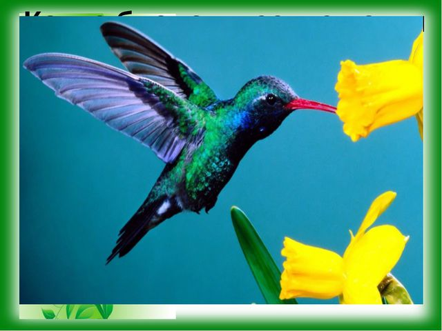 Какие биологические науки установили приведённые факты? Тропическая птичка ко...