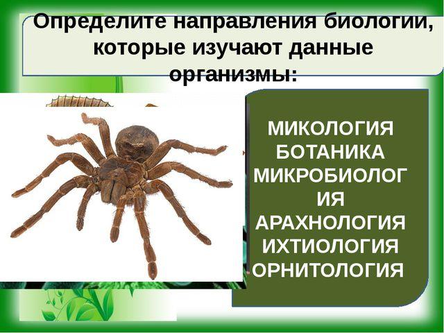 Определите направления биологии, которые изучают данные организмы: МИКОЛОГИЯ...
