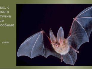 Это одно из самых загадочных животных, с которым связано немало легенд и миф