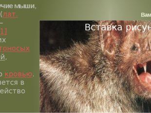 Вампир Вампировые летучие мыши, или десмодовые (лат.Desmodontinae)— подсеме