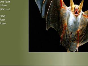 Подотряд крыланы (летучие собаки или летучие лисицы) Megachiroptera Pteropod