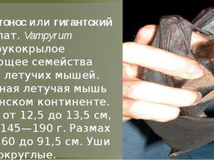 Большой листонос или гигантский лжевампир (лат.Vampyrum spectrum)— рукокры
