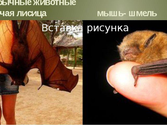 Необычные животные летучая лисица мышь- шмель