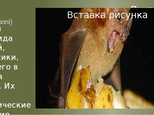 Листонос Банановый листонос (Musonycteris harrisoni) Представители уникально...