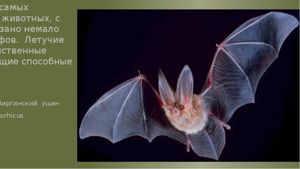 Это одно из самых загадочных животных, с которым связано немало легенд и миф...