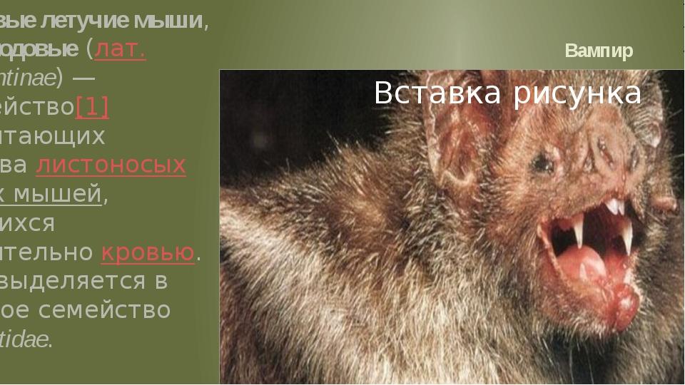 Вампир Вампировые летучие мыши, или десмодовые (лат.Desmodontinae)— подсеме...