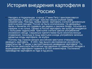 История внедрения картофеля в Россию Находясь в Нидерландах в конце 17 века П
