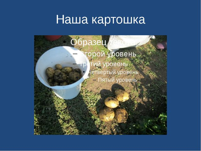 Наша картошка