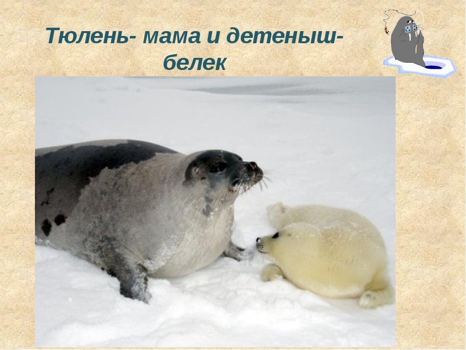 Животные арктических пустынь Среди льдин рыбёшку ищет. А пловец – каких не сы...