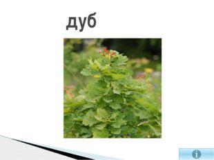 Ковыль-растение семейства злаковые.