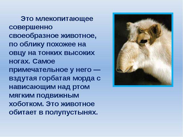 Это млекопитающее совершенно своеобразное животное, по облику похожее на овц...
