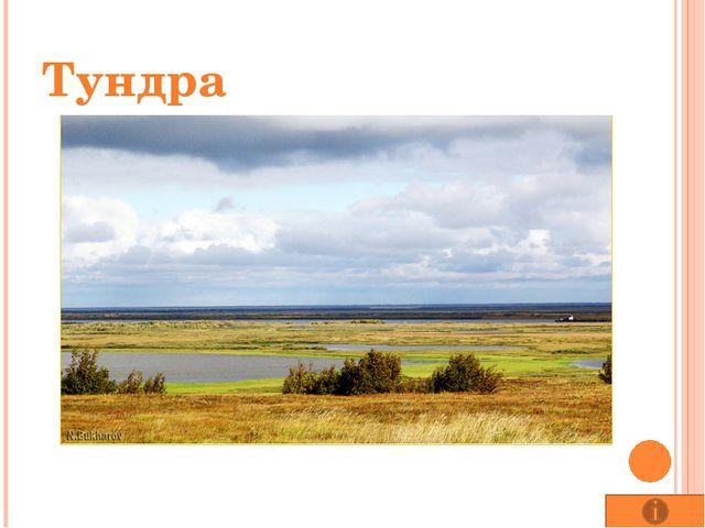 Народные промыслы народов лесной зоны. Хохлома. В лесной зоне, вблизи крупных...