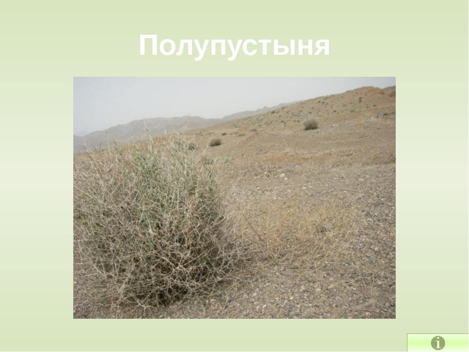 Почвы цвета золы Подзолистые почвы формируются в лесной зоне. Здесь мало трав...