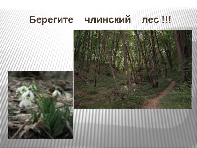 Берегите члинский лес !!!