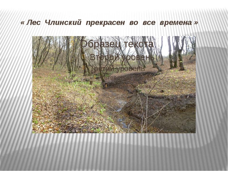 « Лес Члинский прекрасен во все времена »