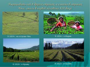Выращивать чай в других странах, а именно в странах Азии, стали в первой пол