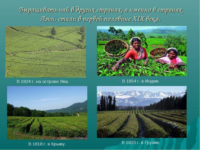 Выращивать чай в других странах, а именно в странах Азии, стали в первой пол...