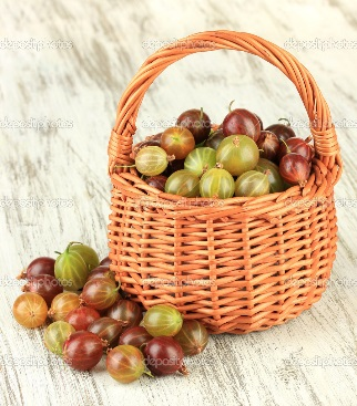 http://st.depositphotos.com/1177973/2930/i/950/depositphotos_29303523-Fresh-gooseberries-in-wicker-basket-on-table-close-up.jpg