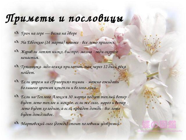 Приметы и пословицы Грач на горе — весна на дворе На Евдокию (14 марта) погож...