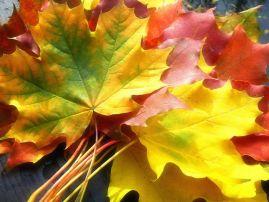 Осенний бал. Сценарий осеннего бала