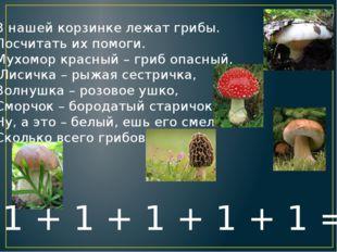 В нашей корзинке лежат грибы. Посчитать их помоги. Мухомор красный – гриб опа