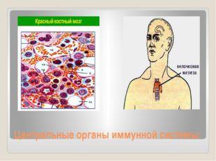 Центральные органы иммунной системы: