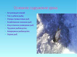 Актуализация знаний Лов и добыча рыбы; Отряды промысловых рыб; Хозяйственное