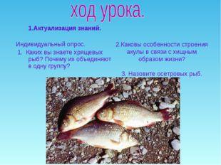 1.Актуализация знаний. Индивидуальный опрос. 1. Каких вы знаете хрящевых рыб?