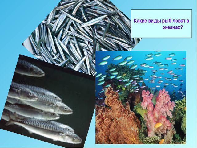 Какие виды рыб ловят в океанах?
