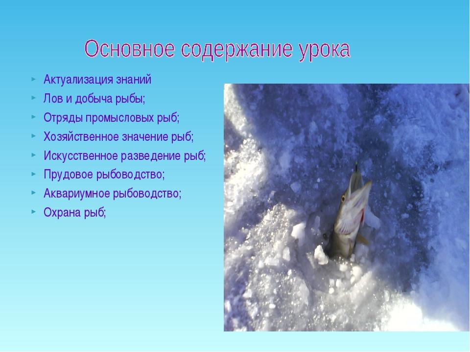 Актуализация знаний Лов и добыча рыбы; Отряды промысловых рыб; Хозяйственное...