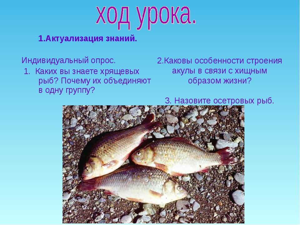 1.Актуализация знаний. Индивидуальный опрос. 1. Каких вы знаете хрящевых рыб?...