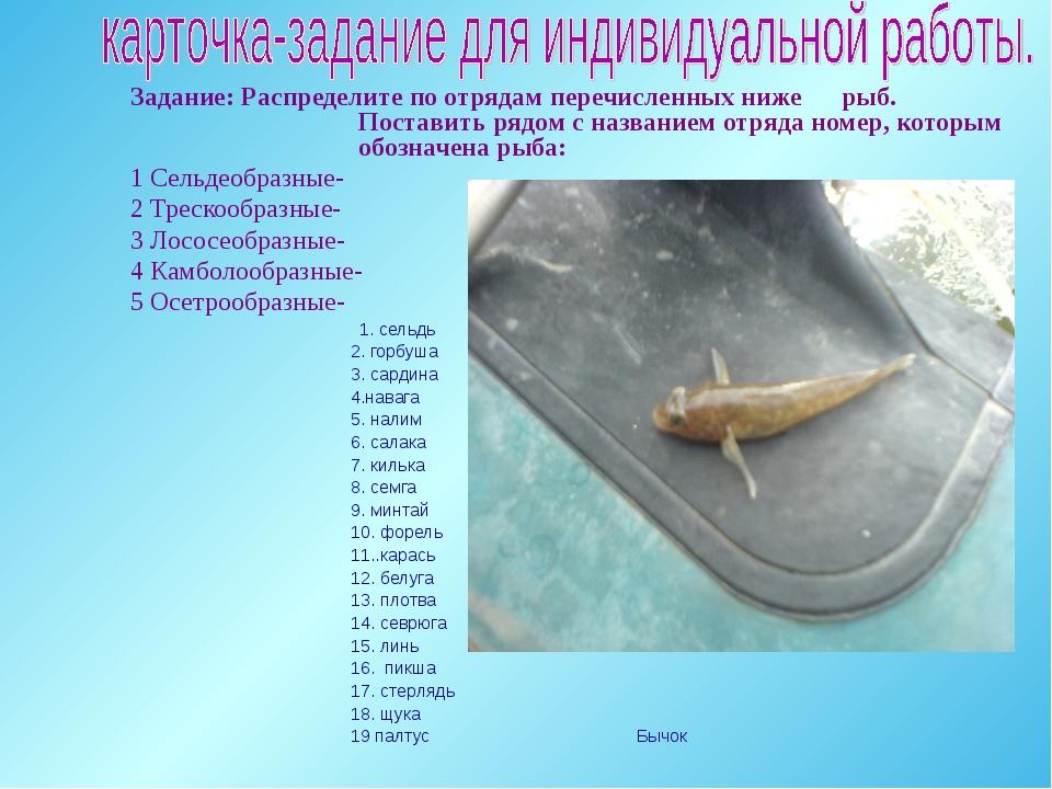 Задание: Распределите по отрядам перечисленных ниже рыб. Поставить рядом с на...
