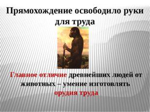 Прямохождение освободило руки для труда Главное отличие древнейших людей от ж