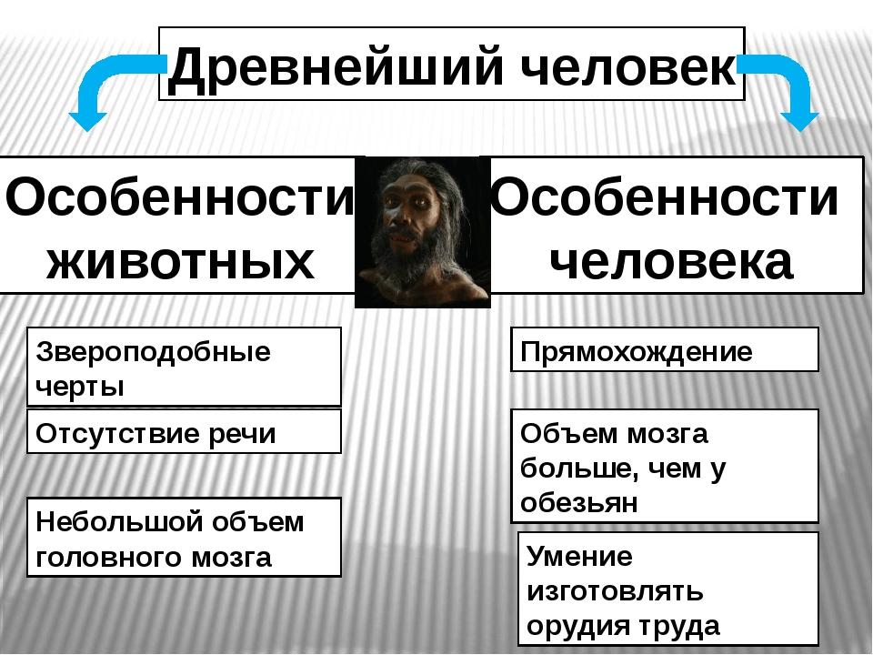Древнейший человек Особенности животных Особенности человека Звероподобные че...