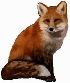 Baby Red Fox Animated Gifs Photobucket