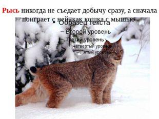 Рысь никогда не съедает добычу сразу, а сначала поиграет с ней, как кошка с м