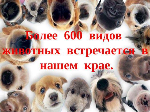 Более 600 видов животных встречается в нашем крае.